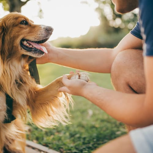 View our pet policy at Madison Arms in Old Bridge, New Jersey