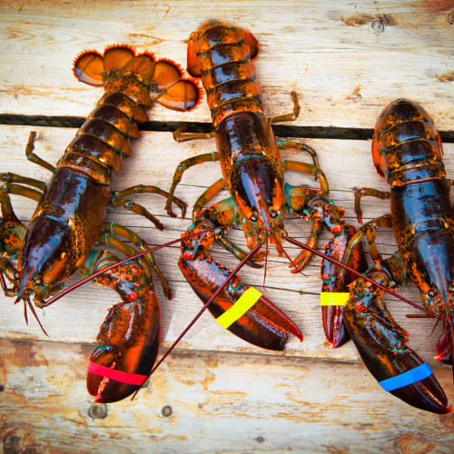 Fresh lobster near Gull Harbor Apartments in New London, Connecticut