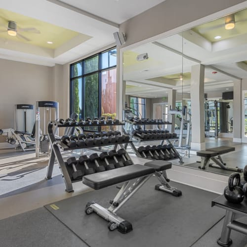 Free weight section with large mirrors in fitness room at Marq at Crabtree in Raleigh, North Carolina