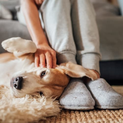 Happy dog and her owner relaxing in their apartment at The Pointe at Siena Ridge in Davenport, Florida
