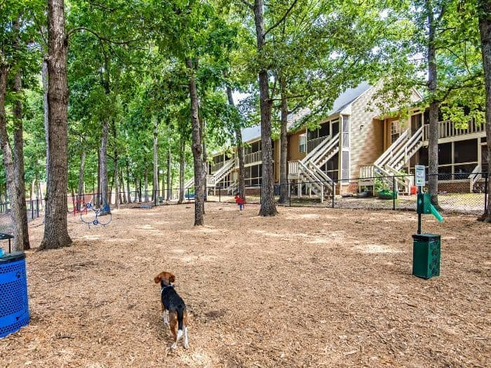 View of the dog park at Six Forks Station in Raleigh