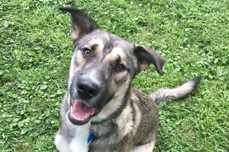 Bosco the Dog at York animal hospital
