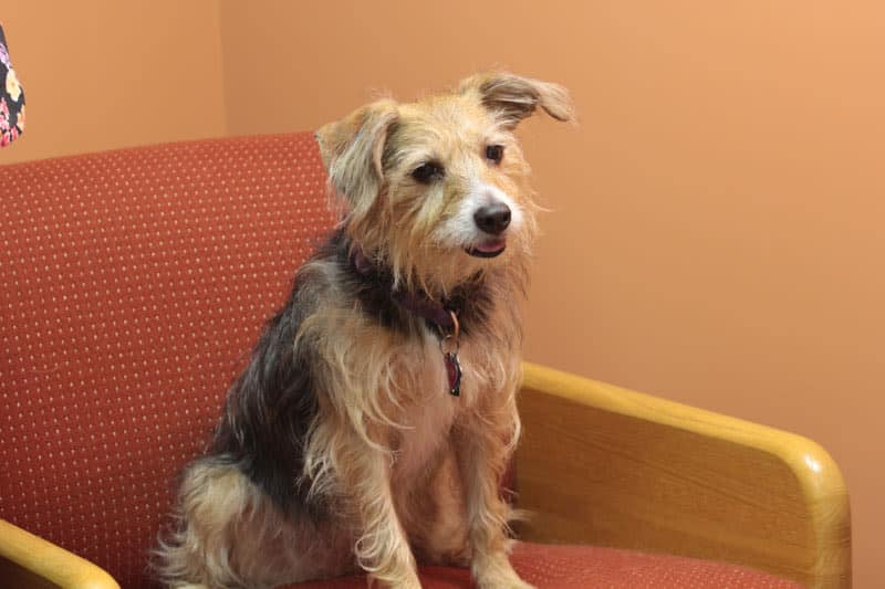 Lucy the Dog at York animal hospital