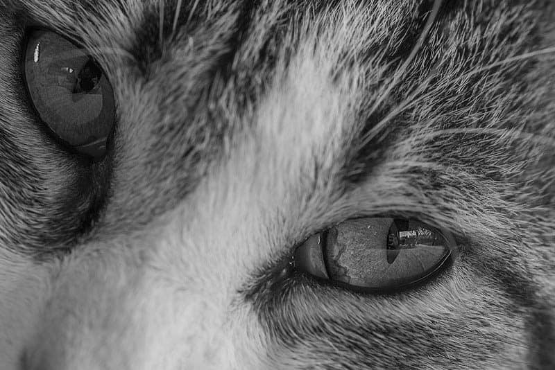 Close up of cat in Winston Salem, North Carolina