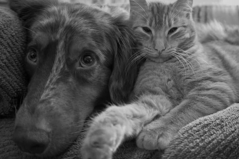 Dog and cat resting together in Winston Salem, North Carolina