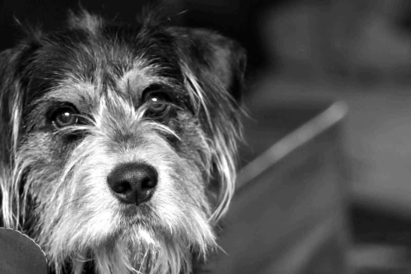 Dog resting in Winston Salem, North Carolina