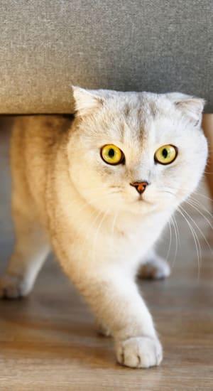 Cat exploring an apartment at Laurel Ridge in Northampton, Massachusetts
