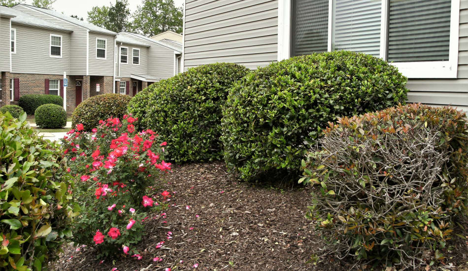 Well manicured grounds at Douglass Village Apartments