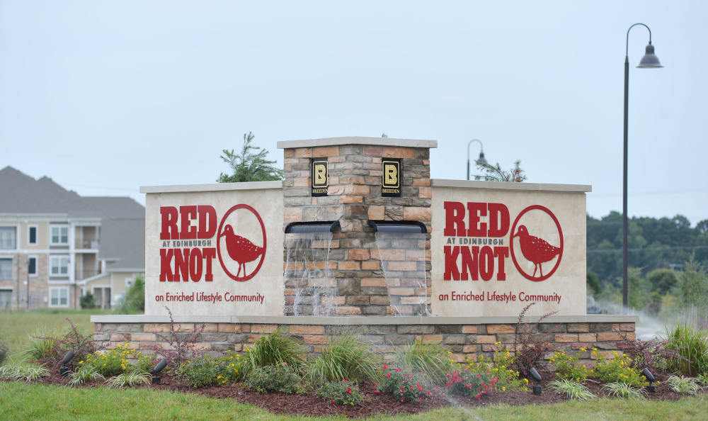 Red Knot at Edinburgh in Chesapeake, Virginia