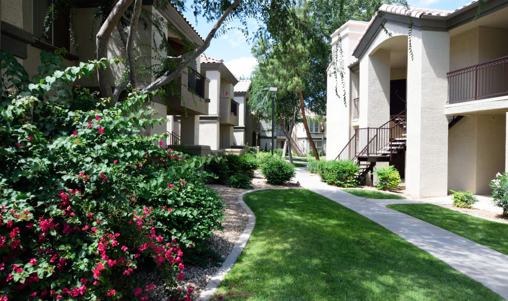 Beautifully maintained landscaping at Lumiere Chandler in Chandler, Arizona