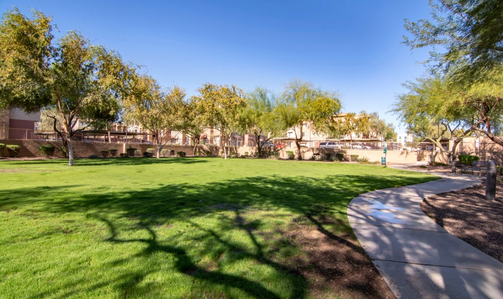 Beautifully maintained lawn in a common area at The Residences at Stadium Village in Surprise, Arizona