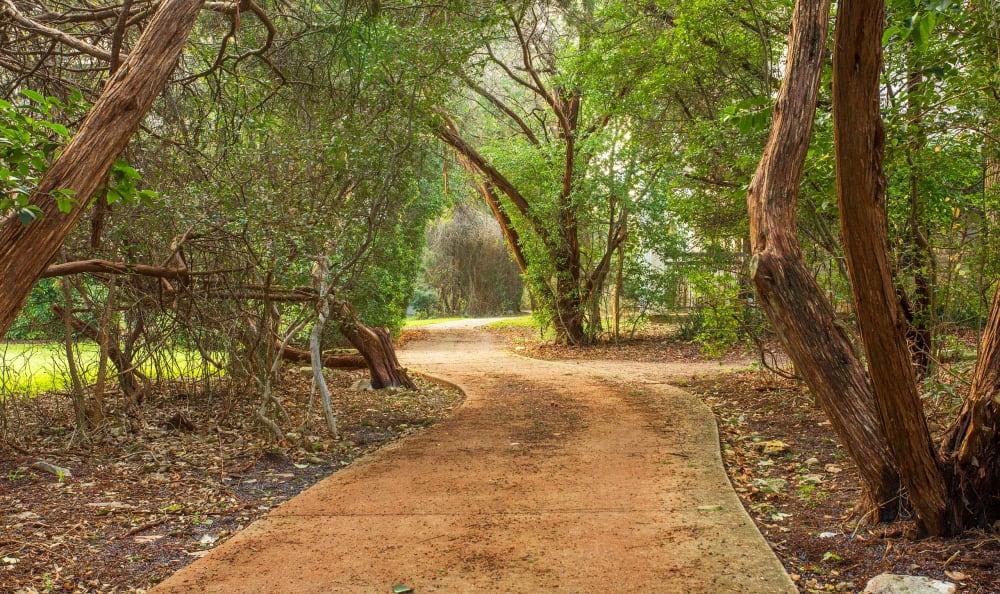 Walking path among mature trees at Riata Austin in Austin, Texas