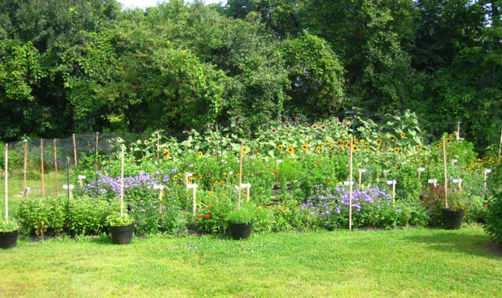 Community garden at Valley Terrace in White River Junction, Vermont