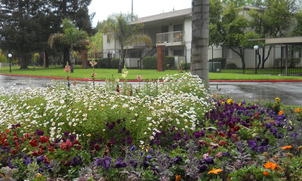 Beautiful gardens of our apartments at River Court Apartments in Sacramento, CA