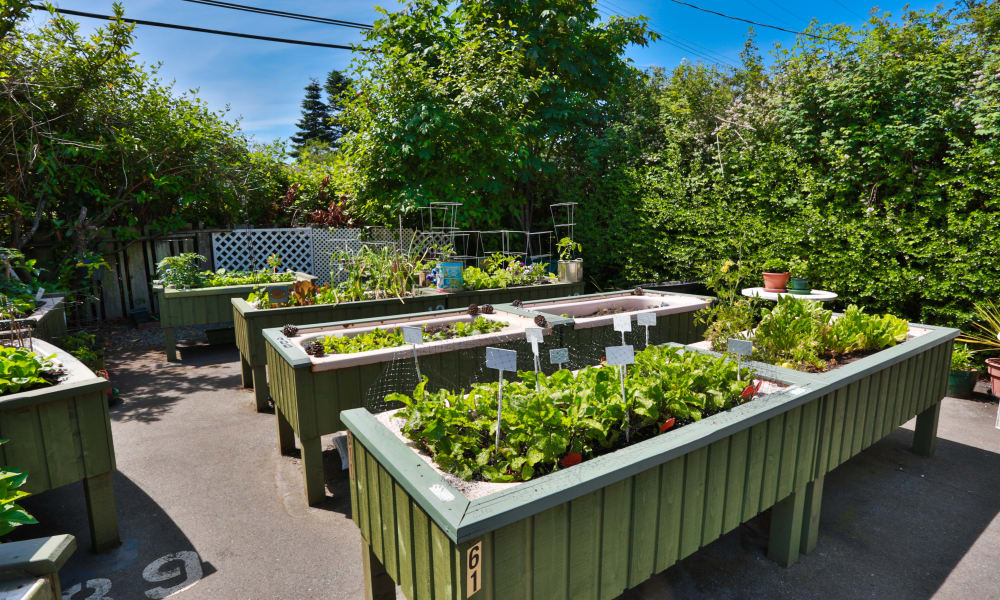 Outdoor garden at Fraser Tolmie Apartments in Victoria, British Columbia