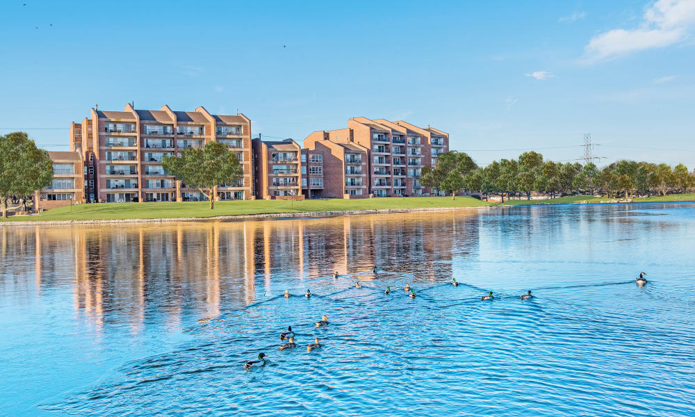 Lake near Regency Lakeside Apartment Homes