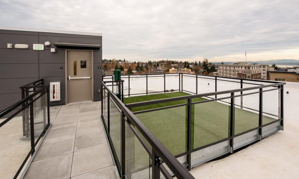 Roof top pet area at Session Apartments in Seattle