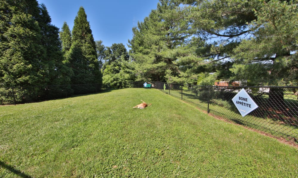 Enjoy Apartments with a Dog Park at Willowood Apartment Homes