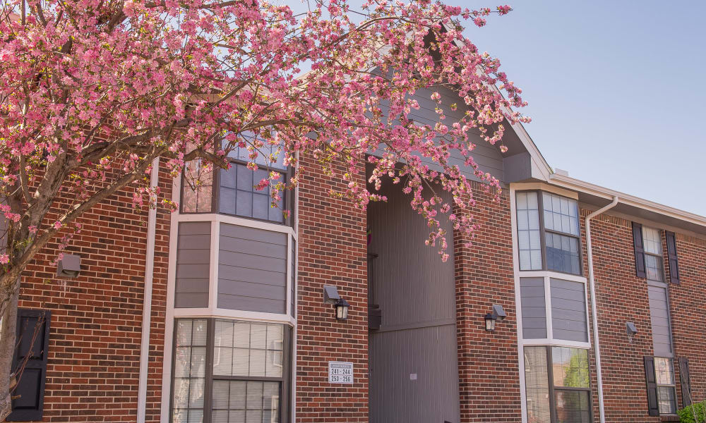 Cherry tree blossoming outside resident building at The Greens of Bedford in Tulsa, Oklahoma