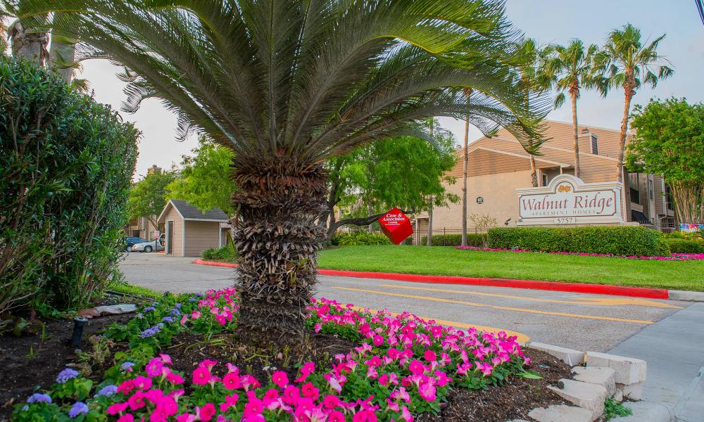 Beautiful flowers at Walnut Ridge Apartments in Corpus Christi, Texas