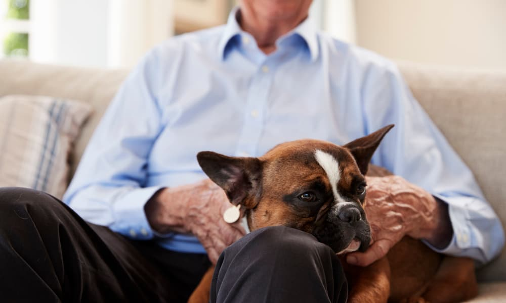 Senior man sitting on the sofa with his pet at Waverly House in Bethesda, Maryland