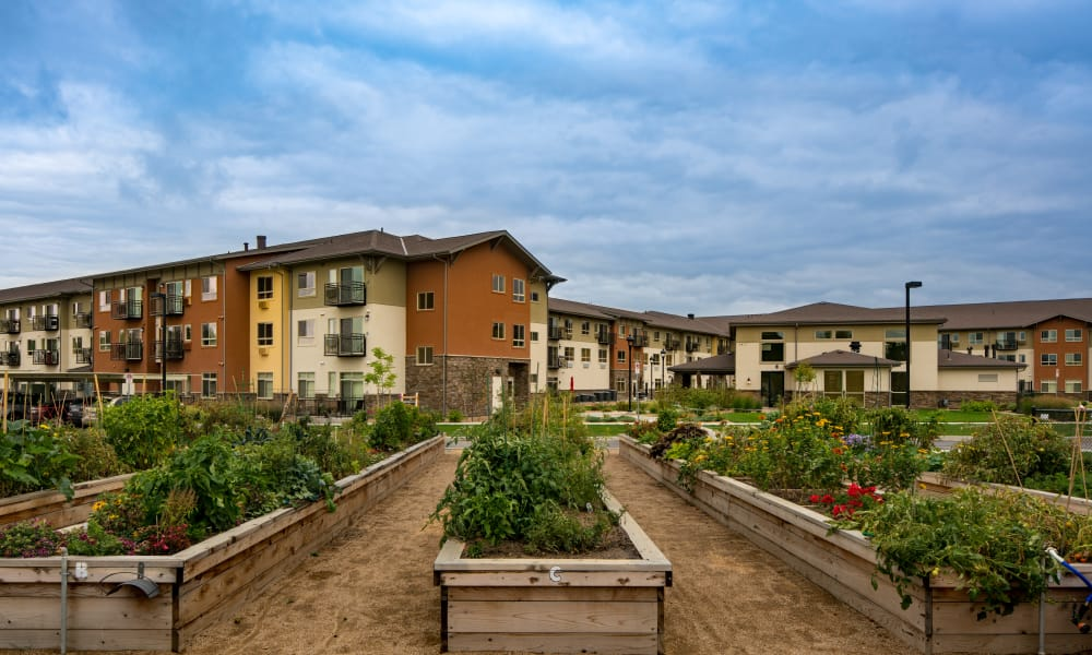 Community gardens at Affinity at Lacey in Lacey, Washington