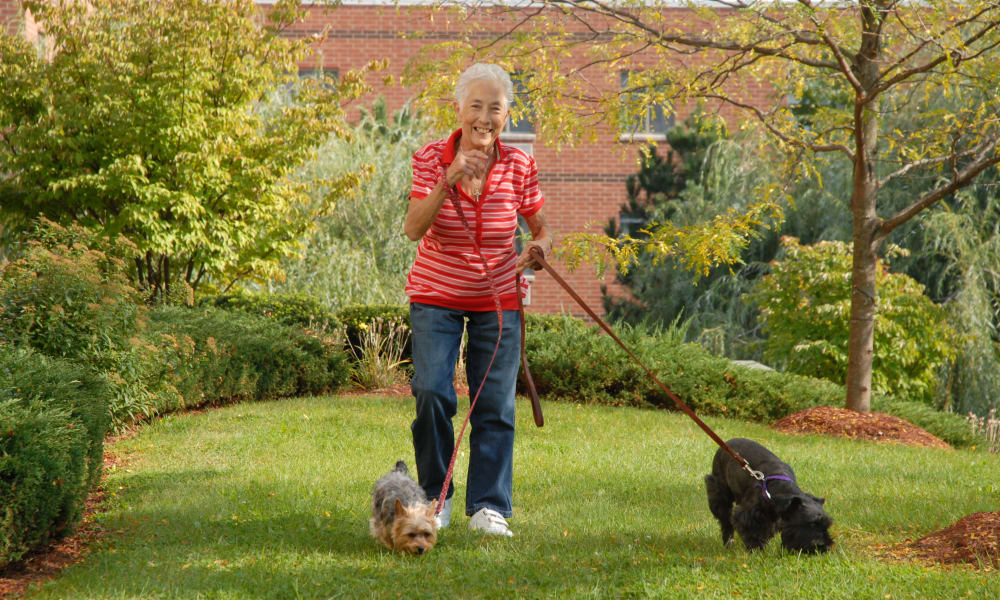 Resident walking her dogs at Chestnut Knoll in Boyertown, Pennsylvania
