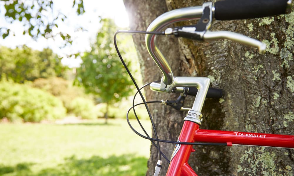Resident's bicycle leaning against a tree in a beautiful green space near Velō in Boston, Massachusetts
