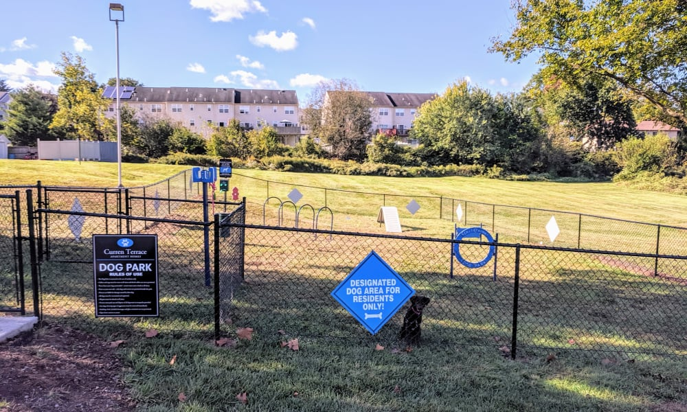 Our Apartments in Norristown, Pennsylvania offer a Dog Park