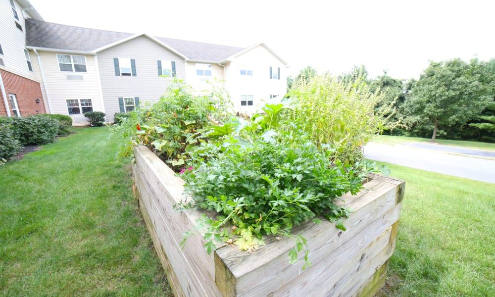 Raised garden bed at Traditions of Hanover in Bethlehem, Pennsylvania
