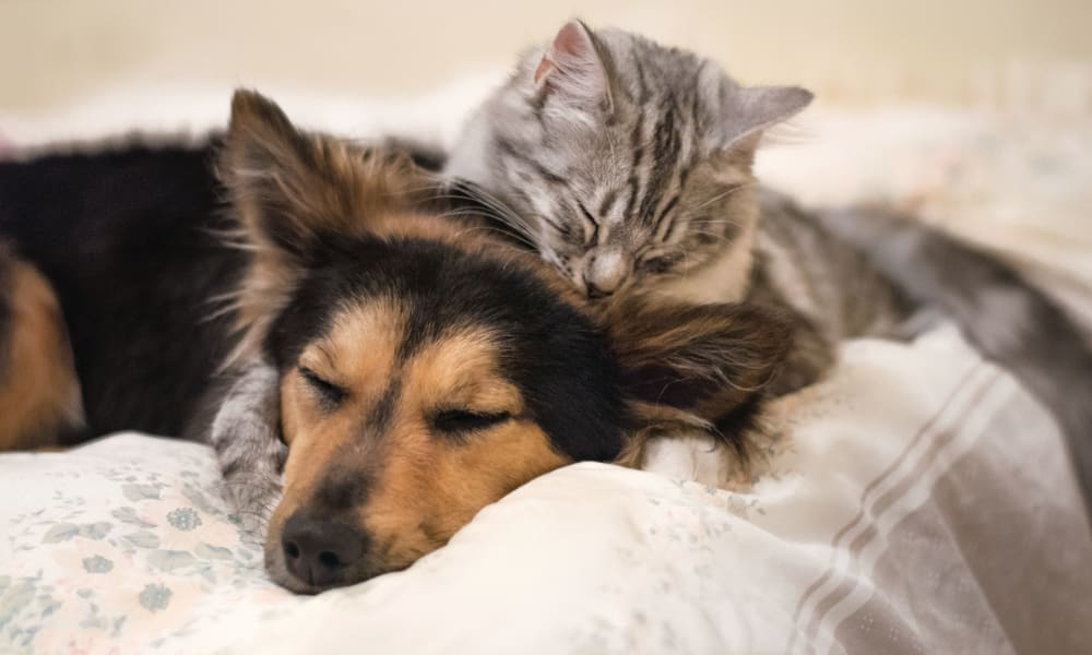 Cat and dog sleeping on the couch at The Nathaniel in Rochester, New York