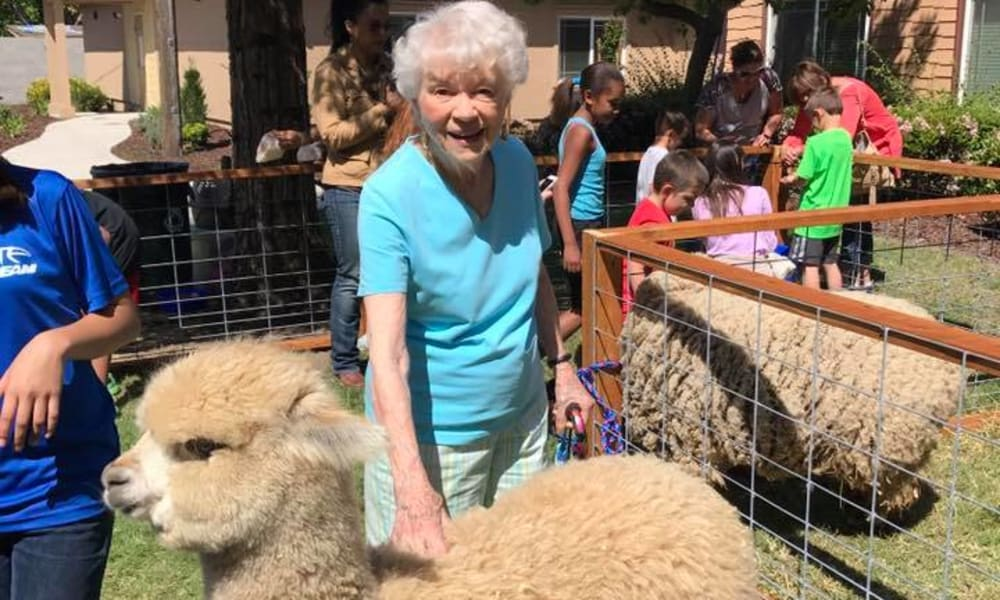 Resident petting an alpaca at an event at Quail Park on Cypress in Visalia, California