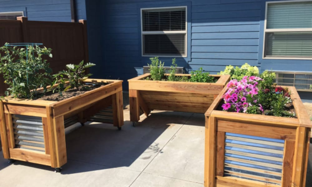 Community garden with several raised planter boxes at Aspen Valley Senior Living in Boise, Idaho