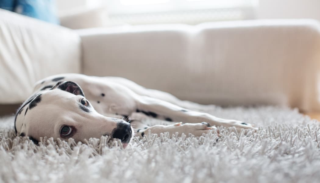 Willow Grove Apartment Homes offers Pet Friendly apartments in Beaverton, OR