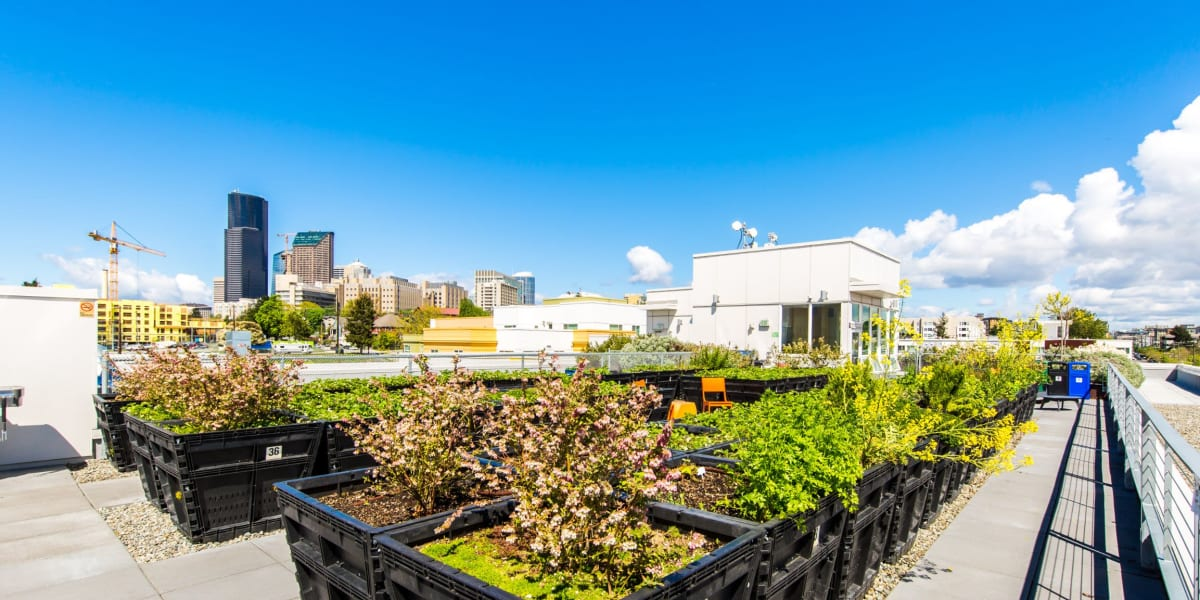 Rooftop garden at Anthem on 12th in Seattle, Washington