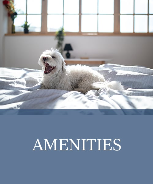 Amenities at Windmill Terrace in Bedford, Texas