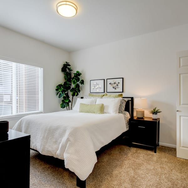 Master bedroom with plush carpeting at The Meadows in Tacoma, Washington