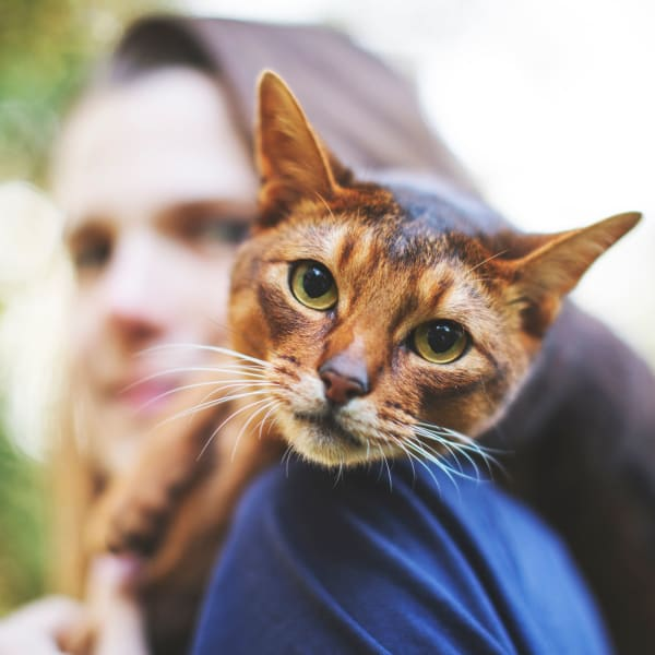 Cat and her owner taking a little walk outside at Olympus Hillwood in Murfreesboro, Tennessee