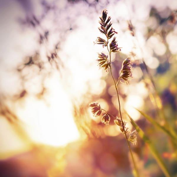Morning sun shining through wildflowers near Walden at Chatham Center in Savannah, Georgia