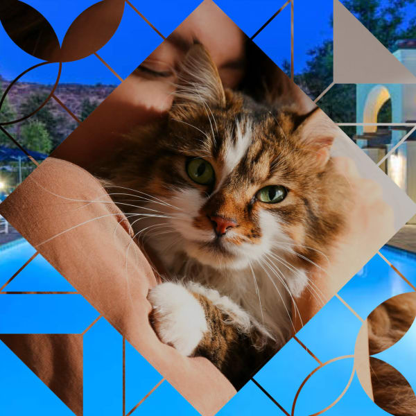 Link to our pet policy at Mission Hills in Camarillo, California