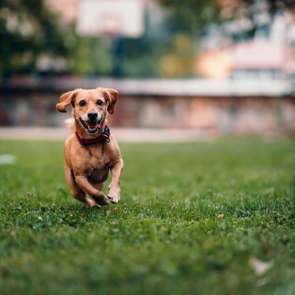 Small dog playing at The Flats at Arrowood in Charlotte, North Carolina
