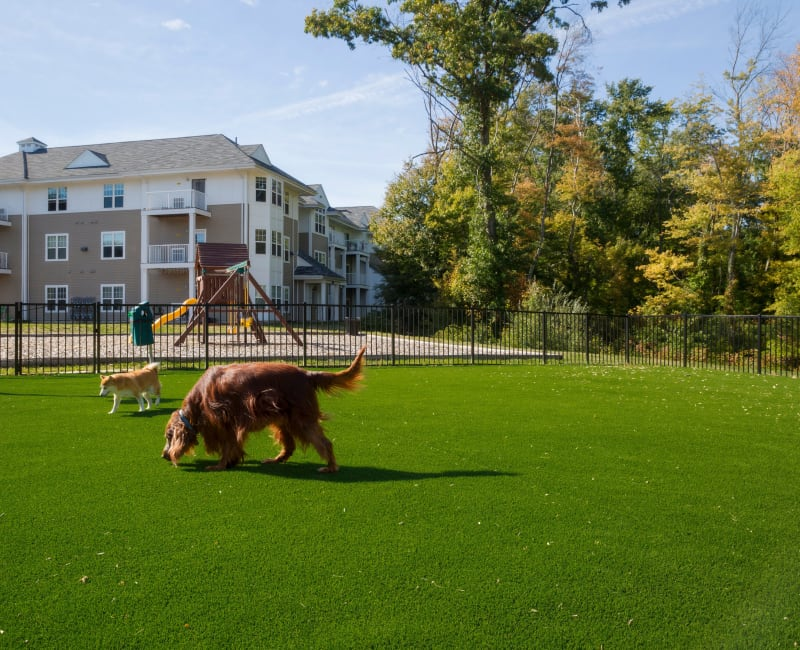 Dog park at Regency Place in Wilmington, Massachusetts
