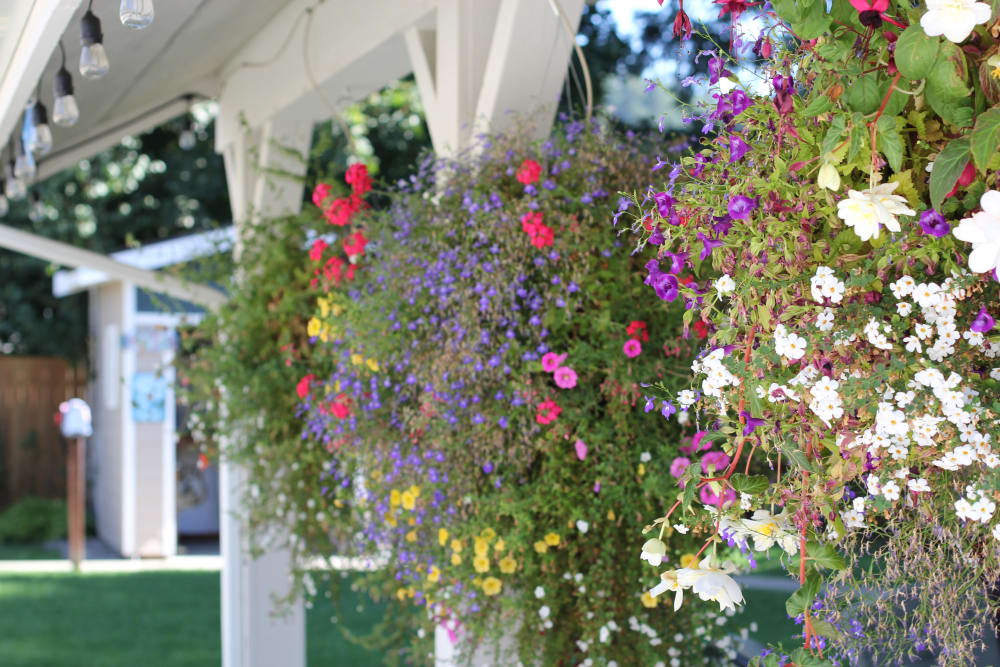 Pretty hanging flower baskets at Memory Haven