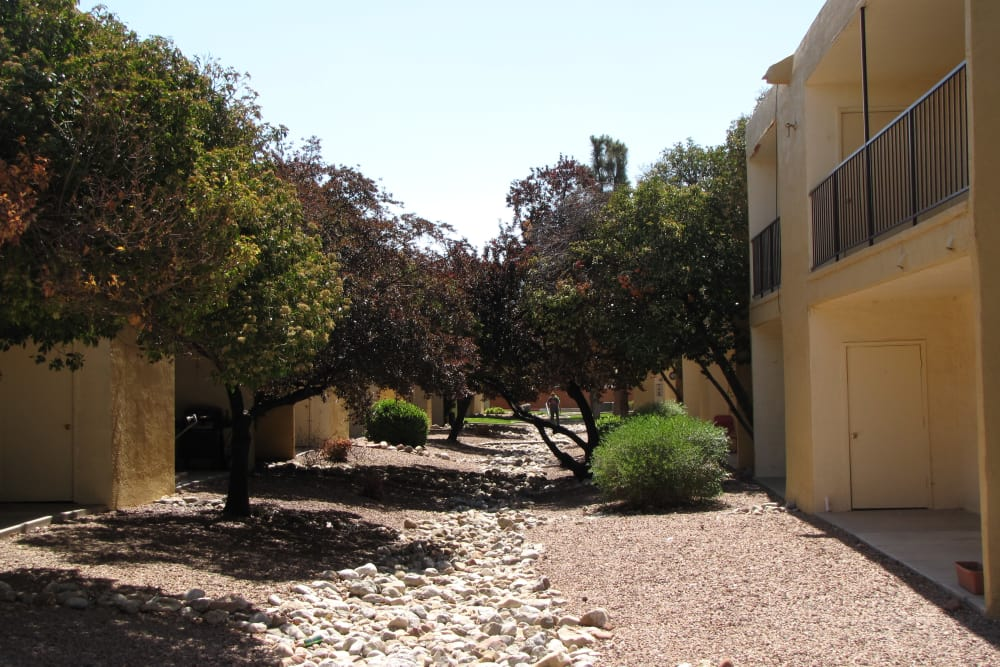 Trees around Sage Canyon Apartments in Albuquerque, New Mexico