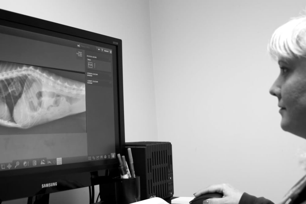 Veterinarian analyzing x-ray at Oldtown Veterinary Hospital in Winston Salem, North Carolina