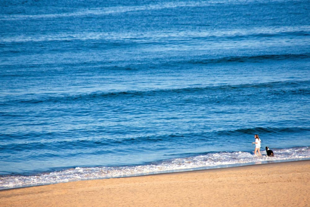 A view of the beach and ocean near Reflections at Virginia Beach in Virginia Beach, Virginia