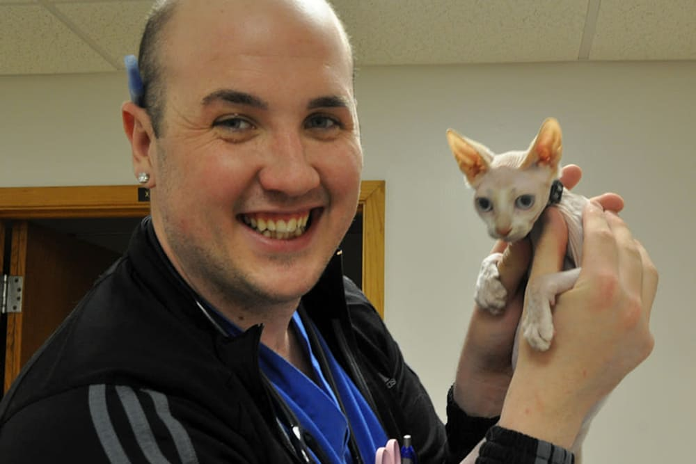 A vet tech at University West Pet Clinic playing with a sphinx kitten