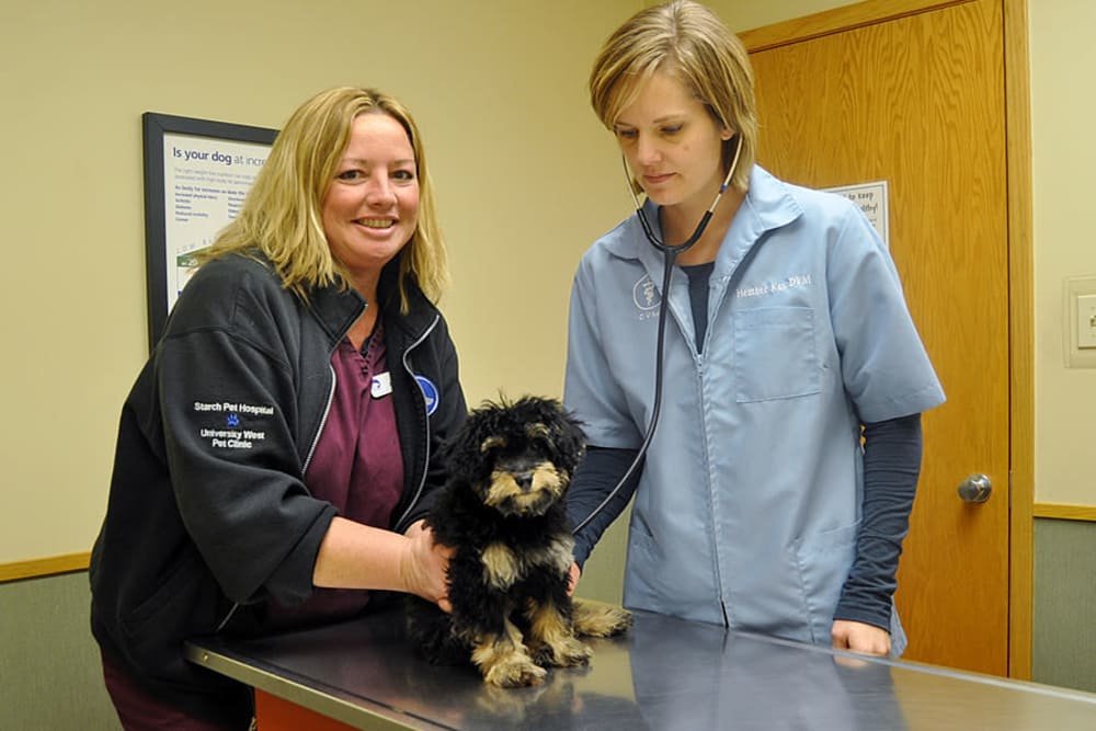 Staff at University West Pet Clinic tend to a dog in need