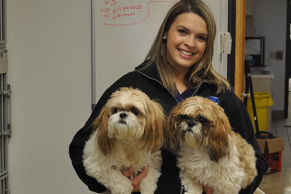 Employee of University West Pet Clinic holding two shih tzus
