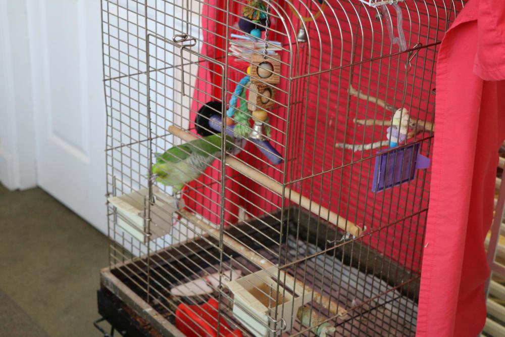 Azalea Estates of Gonzales parrot in Gonzales, LA